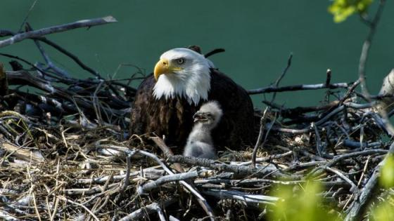 what-is-an-eagles-nest-called_7e3644e5-30e1-487f-bac9-1989789ff726